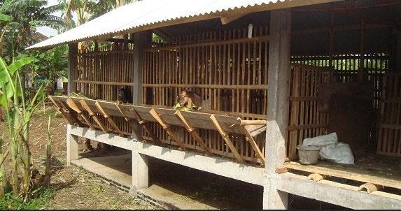 Kandang Ternak Kambing Dari Bambu