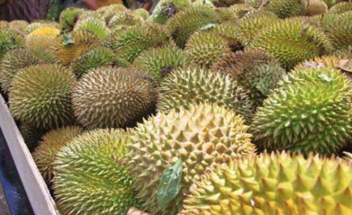 Jualan Buah Durian