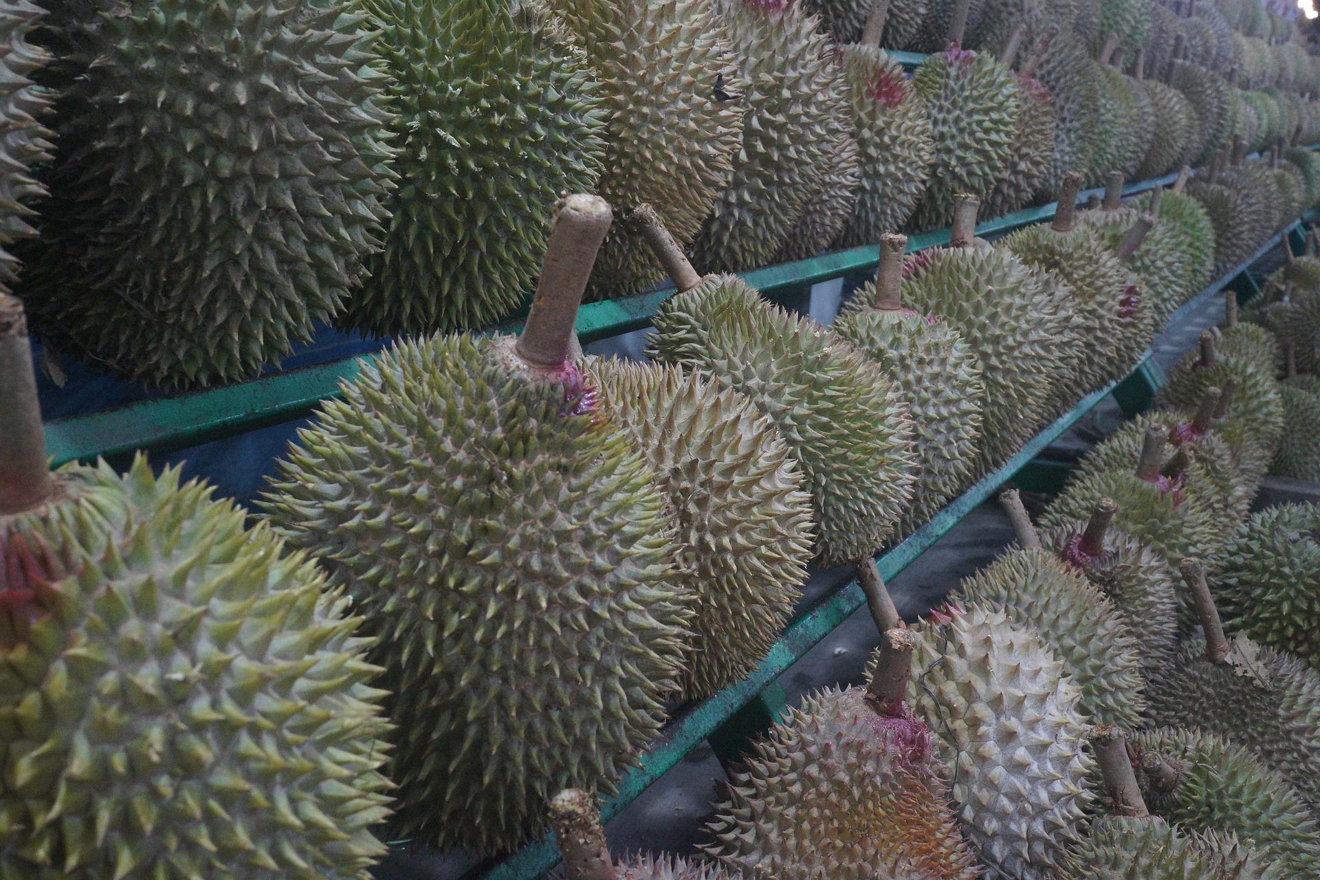 Usaha Bisnis Durian