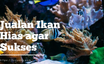 Cara Jualan Ikan Hias