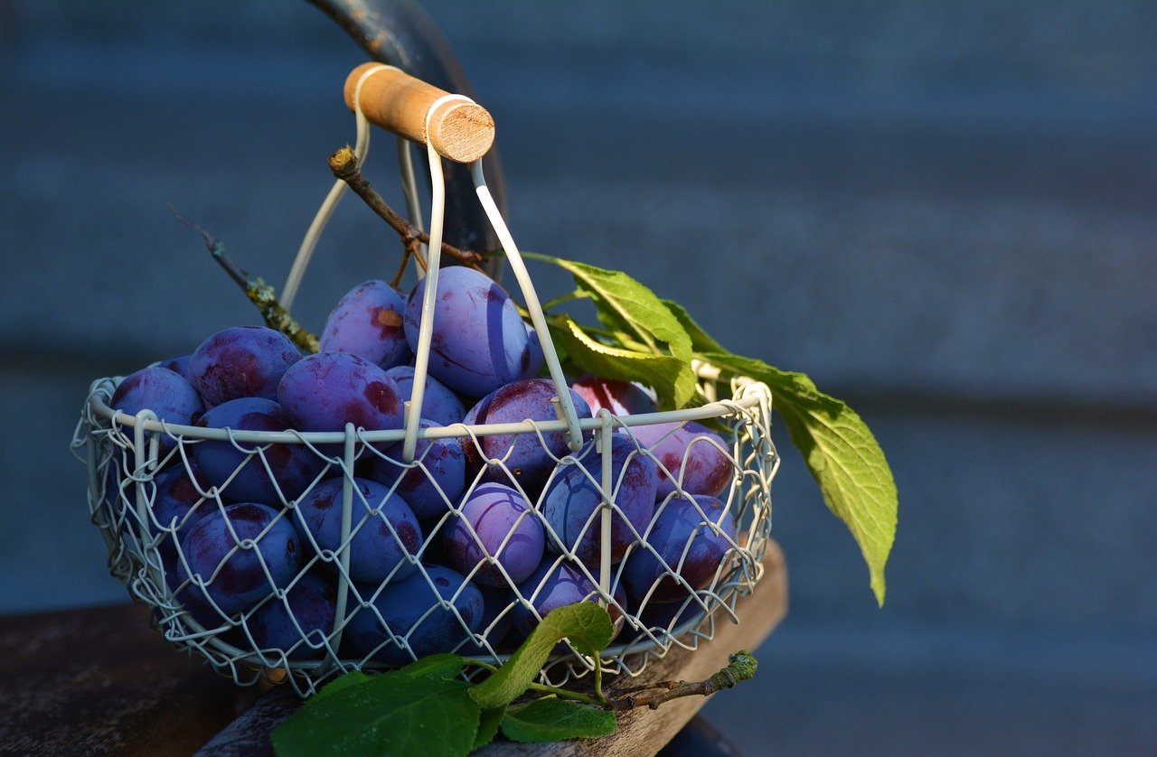 Manfaat Buah Plum untuk Diet